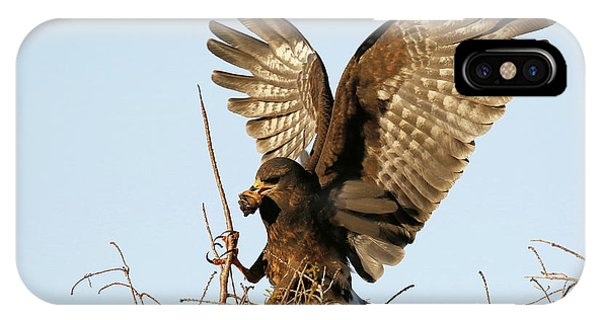 Snail Kite Coming In IPhone Case
