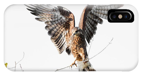 Snail Kite Exposed IPhone Case