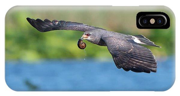 Snail Kite Returning IPhone Case