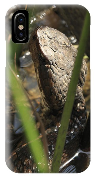 Snake In The Water IPhone Case