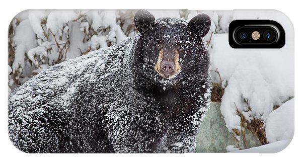 Snow Bear Stare IPhone Case