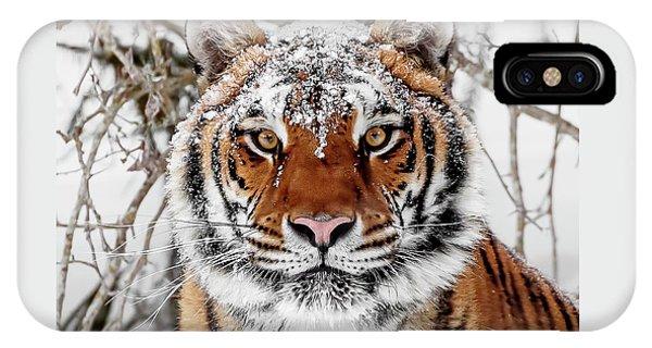Snow Capped Siberian IPhone Case