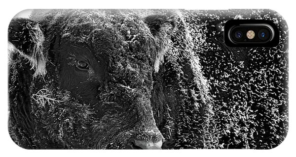 Snow Covered Ice Bull IPhone Case