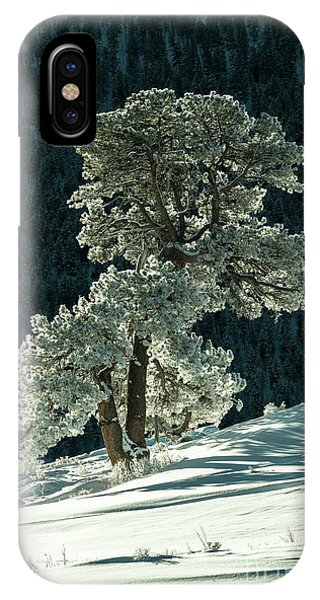 Snow Covered Tree - 9182 IPhone Case