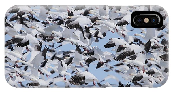 Snow Geese IPhone Case