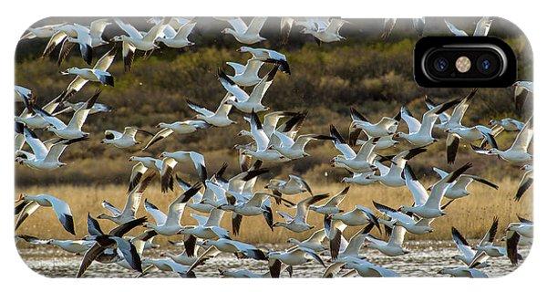 Snow Geese Flock In Flight IPhone Case