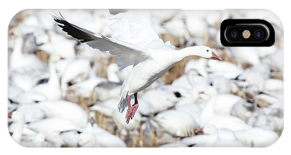 Snow Goose Lift-off IPhone Case