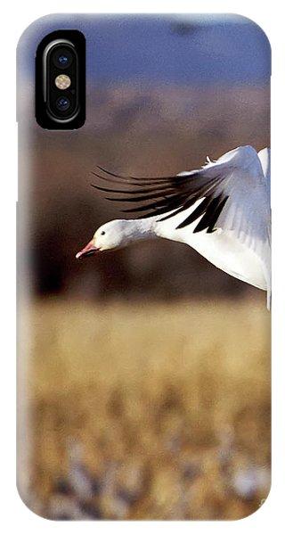 Snow Goose IPhone Case