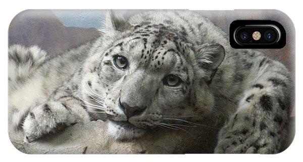 Snow Leopard iPhone Case - Snow Leopard Relaxing by Ernie Echols