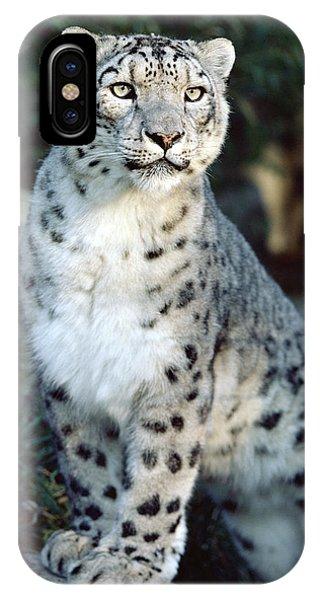 Snow Leopard Uncia Uncia Portrait IPhone Case