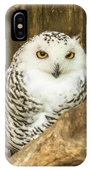 Snow Owl IPhone Case