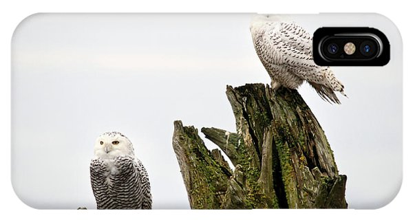 Snow Owls Of Boundary Bay Phone Case by Pierre Leclerc Photography