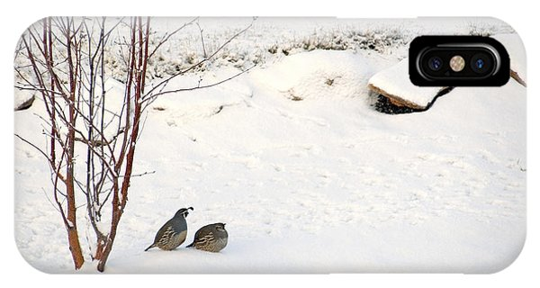 Snow Quail IPhone Case