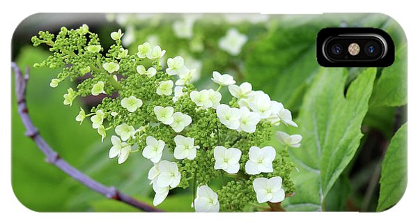 Snow Queen Hydrangea IPhone Case