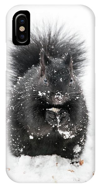 Snow Squirrel IPhone Case