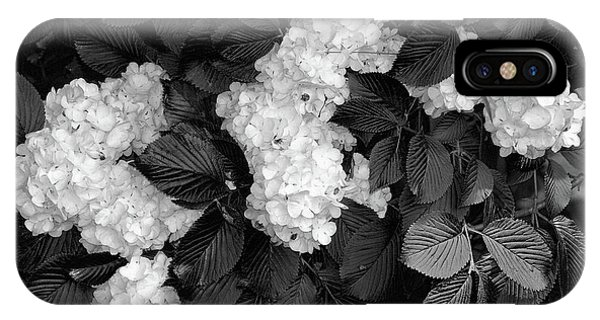 Shrubs iPhone Case - Snowball Bush by Tom Mc Nemar