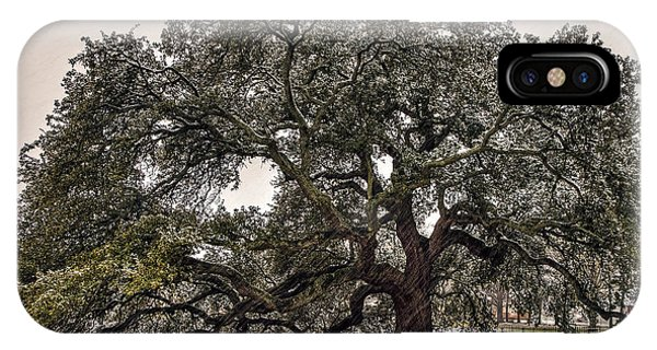 Snowfall On Emancipation Oak Tree IPhone Case