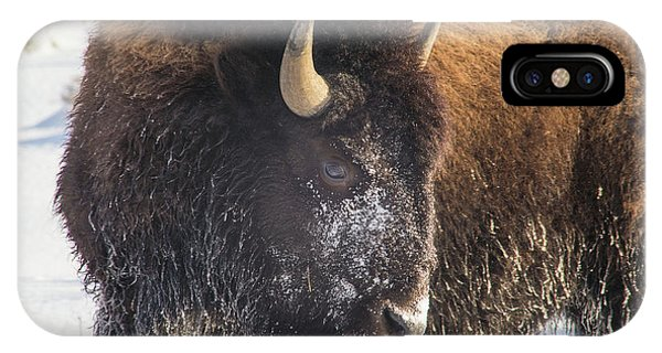 Snowy Bison IPhone Case