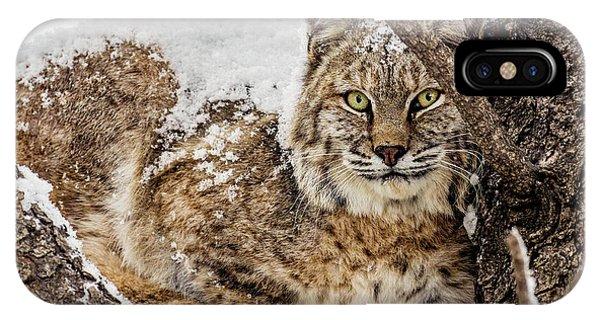 Snowy Bobcat IPhone Case