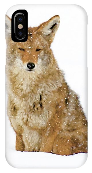 Snowy Coyote IPhone Case