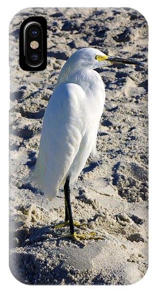 Snowy Egret At Naples, Fl Beach IPhone Case