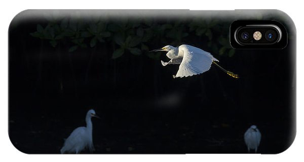 Snowy Egret Gliding In The Morning Light IPhone Case