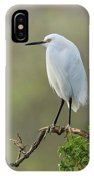 Snowy Egret Portrait IPhone Case