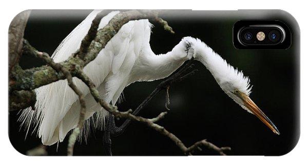 Snowy Egret Setauket New York IPhone Case