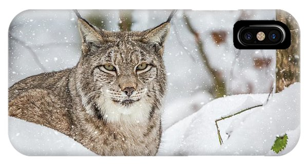 Snowy Lynx IPhone Case