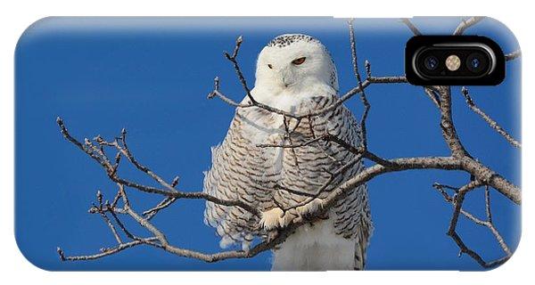 Snowy Owl 7 IPhone Case