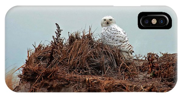 Snowy Owl In Dunes IPhone Case