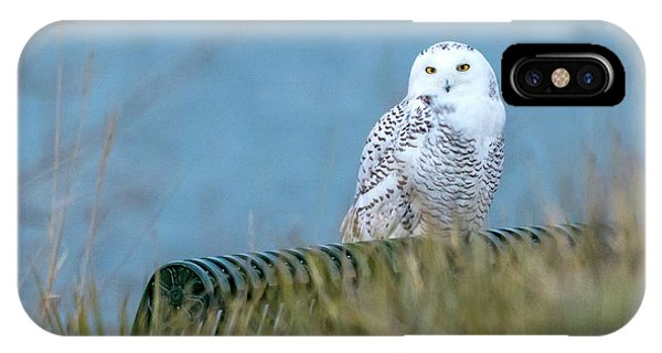 Snowy Owl On A Park Bench IPhone Case