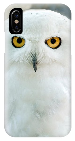 Snowy Owl Portrait IPhone Case