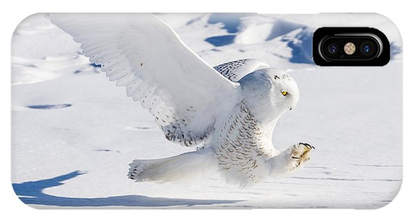 Snowy Owl Pouncing IPhone Case