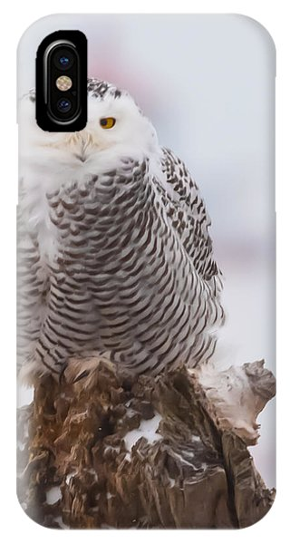 Snowy Owl Winking IPhone Case