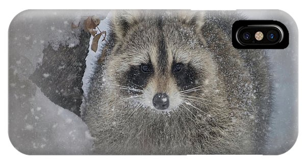 Snowy Raccoon IPhone Case