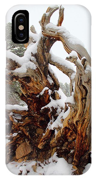 IPhone Case featuring the photograph Snowy Roots 2 by Shane Bechler