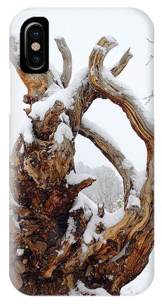 IPhone Case featuring the photograph Snowy Roots by Shane Bechler