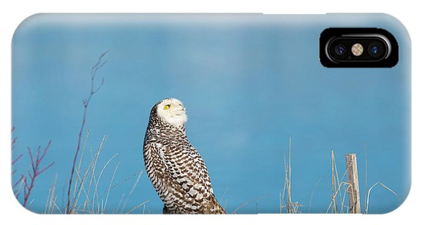 IPhone Case featuring the photograph Snowy Watching A Plane by Brian Hale