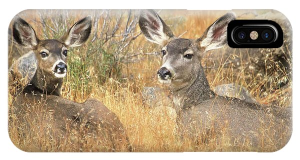 White Tailed Deer iPhone Case - So Much For Your Secret Place... by Donna Kennedy