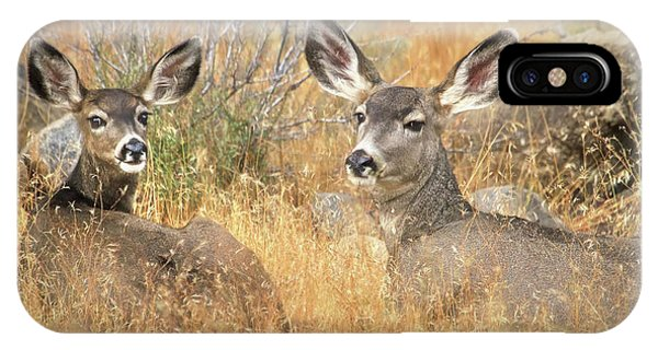 Mule Deer iPhone Case - So Much For Your Secret Place... by Donna Kennedy