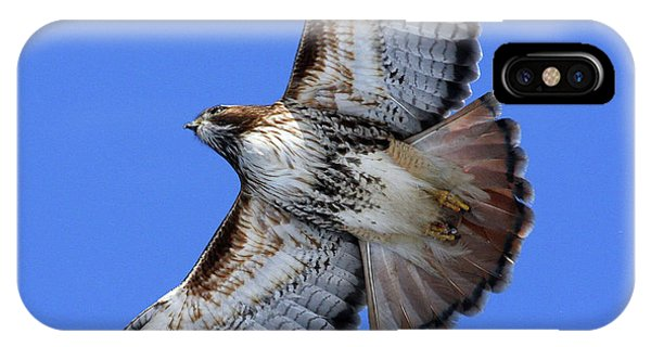 Soaring Red-tail IPhone Case