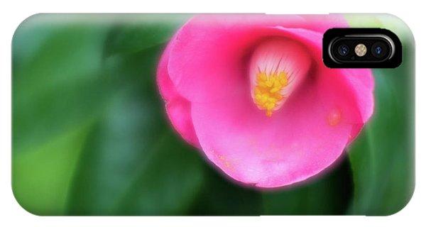 Soft Focus Flower 1 IPhone Case