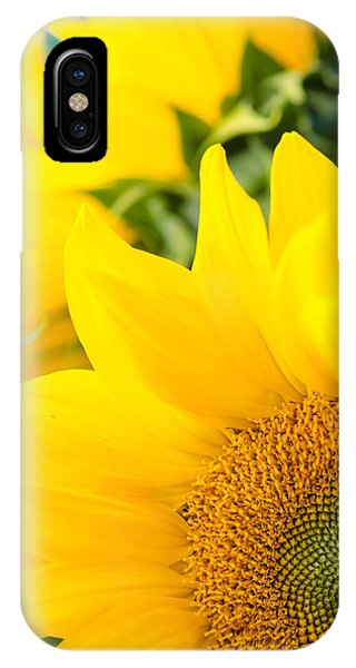 Soft Sunflowers IPhone Case