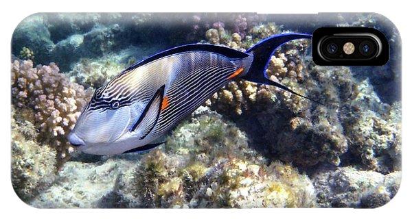 Sohal Surgeonfish 5 IPhone Case