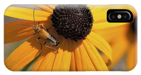 Soldier Beetle On His Flower IPhone Case