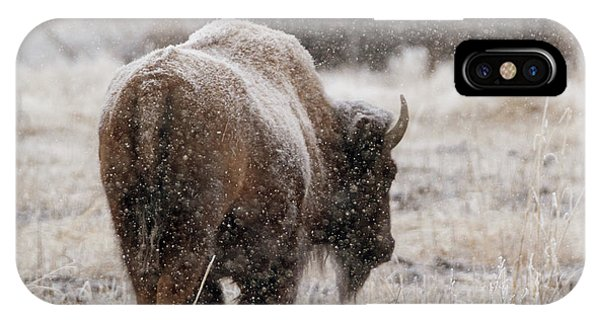 American Bison In Snow IPhone Case