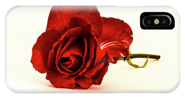 Red Rose Bud IPhone Case