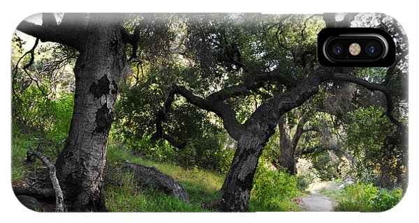 Solstice Canyon Live Oak Trail IPhone Case