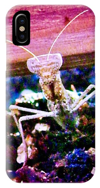 Sonoran Desert Ground Mantis IPhone Case